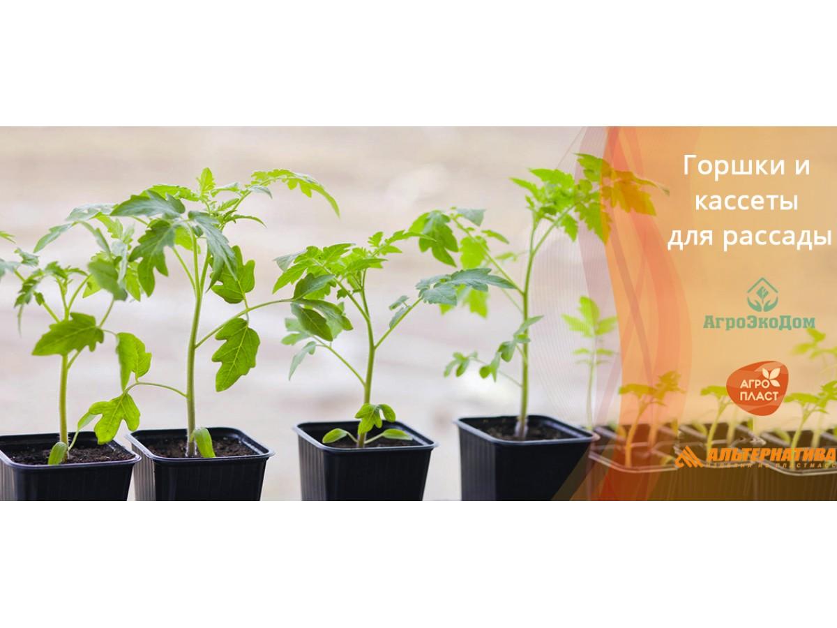 Выращивание рассады: выбираем правильную ёмкость