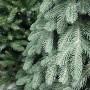 Елка искусственная Премиум зеленая